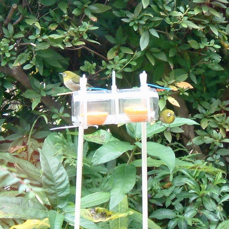 ペットボトルで作った野鳥の餌台